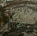 Cotorras-de-cueva.jpg