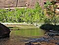 Cottonwood Reflections, Zion NP, UT 5-14 (33280896790).jpg
