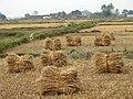Countryside outside Lumbini - Terai - Nepal (13845793965).jpg