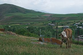 Cow on Hillside over Uyts.jpg