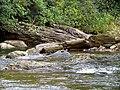 Creek Black Mountain Campground Pisgah Nat Forest NC 4422 (37894591146).jpg