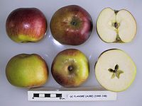 Cross section of De Flandre (Aube), National Fruit Collection (acc. 1949-148).jpg