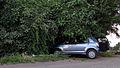 Curico, Car-eater tree (12939712765).jpg