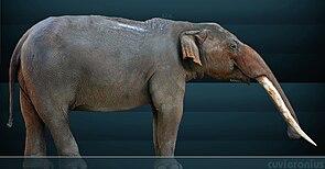 Lebendrekonstruktion von Cuvieronius hyodon