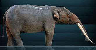 Bacatá - When the first humans arrived in the area of Bacatá, the retreating lake shores were populated by the extinct New World gomphothere Cuvieronius