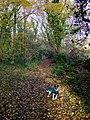 Cwm Dyffryn footpath, November - geograph.org.uk - 1067523.jpg