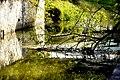 Czarna Przemsza Sosnowiec Park Harcerski 1.jpg