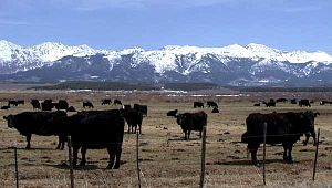 Cattle ranching in Jackson County