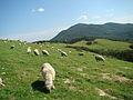Daegwallyeong sheep farm5.jpg