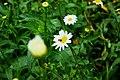 Daisy and the bee.jpg