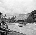 De dorsvloer van een rijstpelmolen in Nickerie, Bestanddeelnr 252-5603.jpg