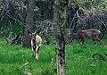 Deer (7004878334).jpg