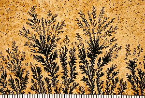 Dendrite (crystal) - Manganese dendrites on a limestone bedding plane from Solnhofen, Germany. Scale in mm.