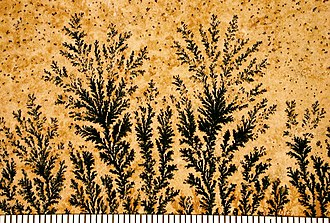 Crystal growth - Manganese dendrites on a limestone bedding plane from Solnhofen, Germany. Scale in mm.