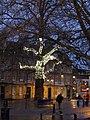 Diamante tree - Kingsmead Square Bath - geograph.org.uk - 1760667.jpg