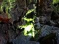 Diktäische Grotte 11.jpg