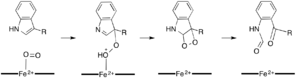 Dioxetane Mechanism