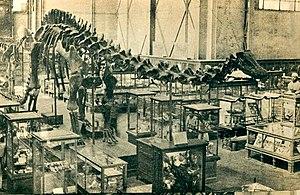 Museo Universitario del Chopo - Diplodocus carnegie at the predecessor Museo Nacional de Historia Natural (1931)