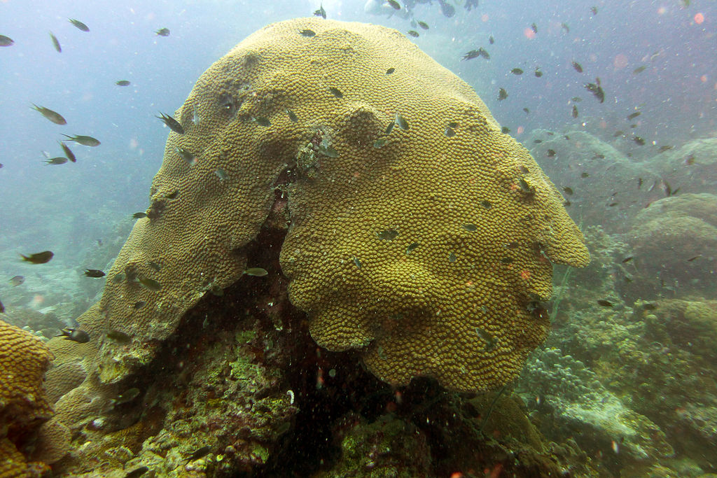 Underwater Diving Wikipedia Autos Post