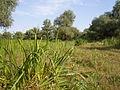Dniester wetlands, Yaski.JPG