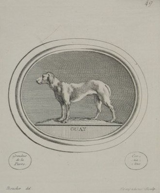 Jacques Guay - Image: Dog drawing by François Boucher engraved by Madame de Pompadour after a work by Jacques Guay c. 1755