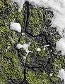 Dornbirn-disapered field mouses passages-05ASD.jpg