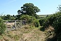 Down St Mary, bridleway to Lammacott Farm - geograph.org.uk - 214187.jpg