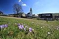 Drebacher Krokuswiesen..2H1A0027WI.jpg