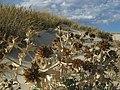 Dune 1 - panoramio.jpg