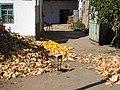 E8024-Milyanfan-corn-huskers.jpg