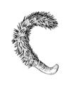 Echinoptilum echinatum.png