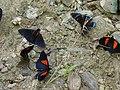 Ecuador Butterflies.JPG