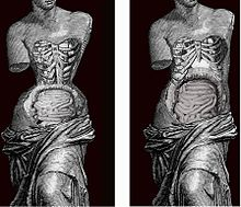 e718d9bba2 Effect of Corset in human body. Image by Valencian Museum of Ethnology.