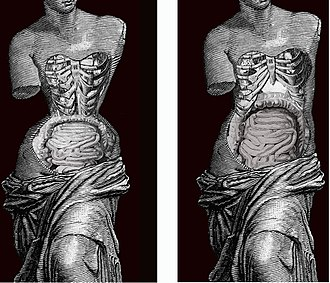 Corset - Effect of Corset in human body. Image by Valencian Museum of Ethnology.