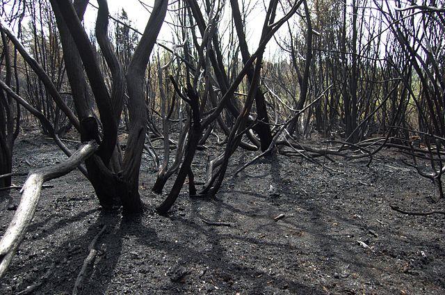 Группа из 27 датских пожарных помогает ликвидировать один из крупнейших лесных пожаров в истории Швеции