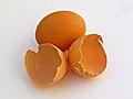 Eggshell 001.jpg