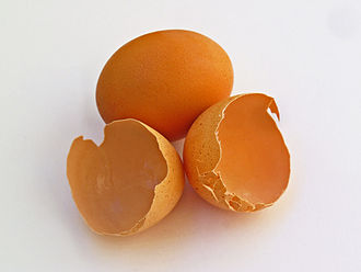 40 Eridani - A collection of egg shells, from which Keid derives its name.