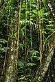 El Yunque N.F. 10.jpg