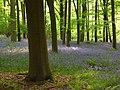 Embley Wood - geograph.org.uk - 800661.jpg