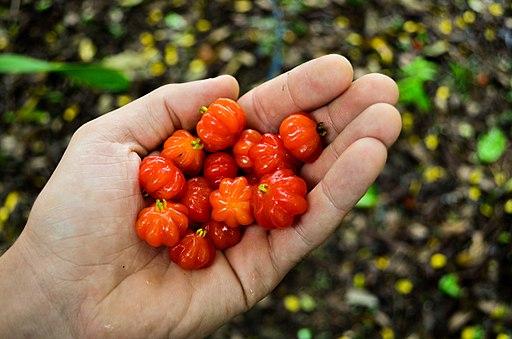 Eugenia uniflora frutas