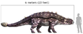 Euplocephalus size comparison with human.png