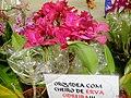 Exposição Nacional de Orquídeas de Catanduva no Colégio Nossa Senhora do Calvário-Colegião. Orquídea com cheiro de Erva Cidreira - panoramio.jpg