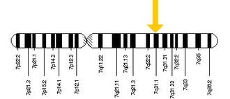 FOXP2 -  FOXP2 gene is located on the long (q) arm of chromosome 7 at position 31.