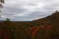 Fall-foliage-trees-hillside - West Virginia - ForestWander.jpg
