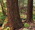Fall Creek (Revisited) (17) (11659308573).jpg