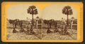 Farming, Fort George Island, from Robert N. Dennis collection of stereoscopic views.png