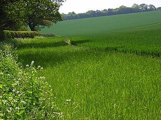 Harrow Way - Looking up to woodland on the Harrow Way near Overton, Hampshire