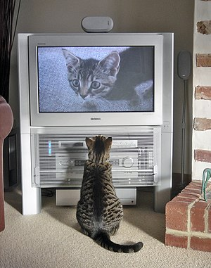 Display resolution - A 16:9-ratio television from October 2004