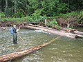 Female Researcher Surveying Stream, Mt Hood National Forest (29365130724).jpg