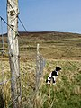 Fence - geograph.org.uk - 415914.jpg